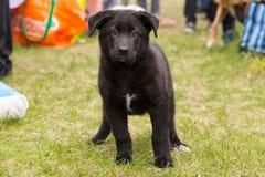 O cachorrinho preto bonito bonito está estando na grama fora imagens de stock
