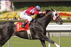 O cacique bold(realce) ganha o copo 2009 de Califórnia Classi Imagens de Stock Royalty Free