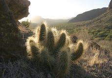 O cacto bonito nas montanhas, o sol passa através do th Fotos de Stock