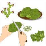 O cacto de pera espinhosa rema na mão humana com uma faca Nopales verdes comestíveis no fundo branco fotografia de stock