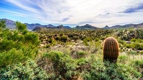 O cacto de tambor e muitos cactos e arbustos do Saguaro no deserto montanhoso ajardinam perto do lago Bartlett imagem de stock royalty free