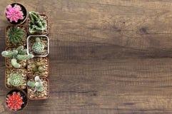 O cacto e as plantas carnudas da vista superior em uns vasos de flores pequenos wodden sobre o CCB imagem de stock