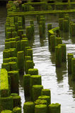 O cais do oceano arruina distante Fotografia de Stock