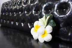 O cal moldado da flor do frangipani decora no sofá de couro preto imagens de stock