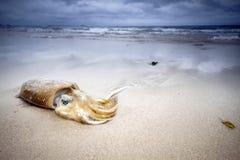 O calamar encontra-se na praia na areia no fundo do céu nebuloso foto de stock