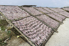 O calamar secado é o alimento dos pescadores perto do oceano Foto de Stock