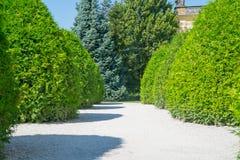 O caminho ajardinado do branco de jardim formal flanqueou pelo verde dado forma Fotos de Stock
