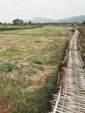 O caminho de bambu entre o campo verde imagens de stock