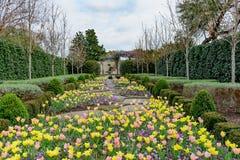 O caminho de pedra alinhou com as tulipas amarelas, cor-de-rosa e do pêssego, v roxo Imagens de Stock