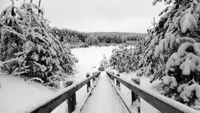 O caminho nevado ao inverno real Fotografia de Stock Royalty Free