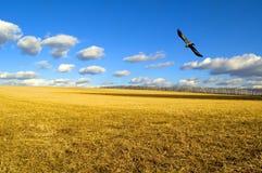 O campo. Foto de Stock