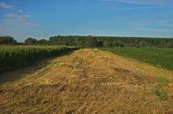 O campo agrícola vazio já colheu, e crescimento de colheitas em ambos os lados imagem de stock royalty free