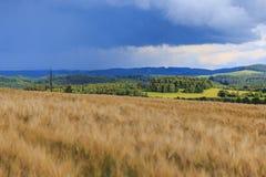O campo após a chuva fotos de stock royalty free
