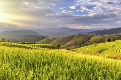 O campo bonito do arroz do terraço no tempo do por do sol, Pa bong a vila do tirbe do monte do piang, Chiangmai, Tailândia Fotos de Stock Royalty Free