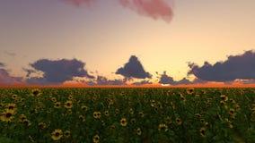O campo 3D do sunflowerrise do por do sol rende vídeos de arquivo