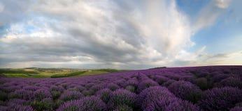 O campo da alfazema do amanhecer lavra o horizonte imagens de stock royalty free