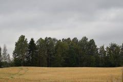 O campo da cevada tem sido colhido já imagens de stock royalty free