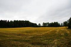 O campo da cevada tem sido colhido já imagens de stock