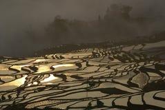 O campo de almofada dourado Foto de Stock Royalty Free