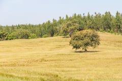 O campo de exploração agrícola com as árvores no vale Seco, Santiago faz Cacem Fotografia de Stock