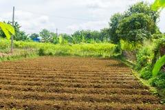 O campo de exploração agrícola já fertilizado e apronta-se para cultivar com arbustos ao redor e o céu bonito como a foto do fund fotos de stock