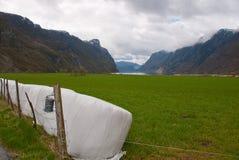 O campo de exploração agrícola no fiorde Imagens de Stock Royalty Free