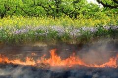 O campo de exploração agrícola queimado no inverno cresce flores vegetais vigorosas na mola