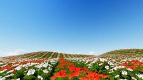 O campo de flor animado 3D rende ilustração royalty free