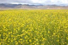O campo de flor da mola Imagem de Stock Royalty Free
