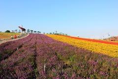 O campo de flor de quatro estações Foto de Stock Royalty Free