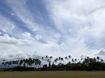 O campo de grama usado para esportes com as árvores de coco em parques afia Imagens de Stock