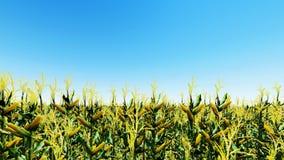 O campo de milho com céu azul 3D rende Foto de Stock Royalty Free