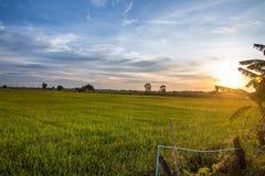 O campo de milho na luz Fotografia de Stock