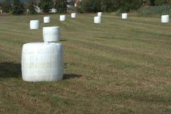 O campo desarrumou com os pacotes da ensilagem do feno envolvidos na folha Foto de Stock