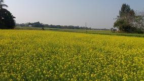 O campo do amarelo flurocent Imagem de Stock
