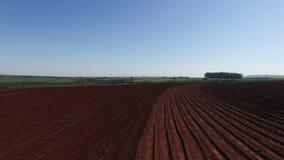 O campo do cana-de-açúcar no Sao Paulo Brazil - zorra aérea no solo excedente do campo do cana-de-açúcar - cana-de-açúcar arquivo filme