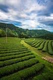 O campo do chá verde nas montanhas fotografia de stock