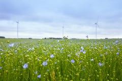 O campo do linho e de moinhos de vento de florescência Fotografia de Stock