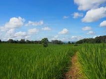 o campo e o céu agradável Foto de Stock