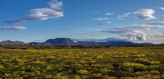 O campo e o vulcão cobertos musgo de lava montam perto da paisagem do verão de Myvatn do lago Fotografia de Stock
