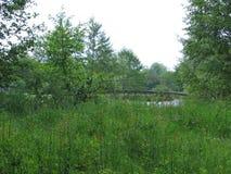 O campo e a ponte pequena no rio Imagens de Stock