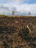 O campo foi queimado Imagens de Stock Royalty Free