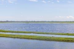 O campo inundado em uma exploração agrícola da exploração agrícola e o vegeation em Lagoa fazem o LAK de Peixe fotografia de stock