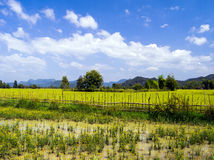 O campo perto da caverna de Tham Xang. Laos. Imagem de Stock Royalty Free
