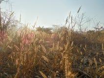O campo planta lite com luz do por do sol da noite fotos de stock