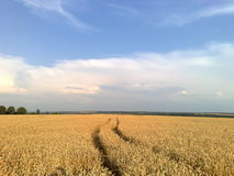 O campo sae em direção ao céu foto de stock royalty free