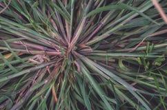 O campo selvagem da grama no por do sol, sol macio irradia, morno foto de stock