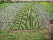 O campo semeado Foto de Stock