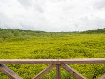 O campo tagal de Ceriops que olha do balcão de madeira em Tailândia imagem de stock