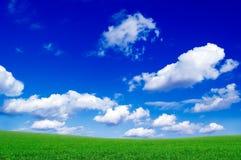 O campo verde. Imagem de Stock